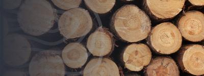 Why is the Price of Timber Rising?