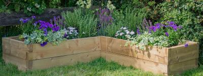 Grow your own with Timberworld